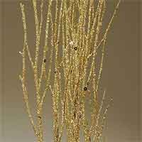 Birch Branches - 12 Bundles - Gold Sequin Sparkle