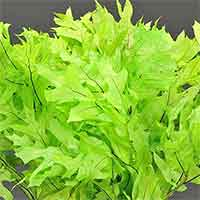 Oak Leaves - Chartreuse - 25 1 lb Bundles