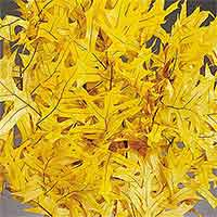 Oak Leaves - Yellow - 25 1 lb Bundles