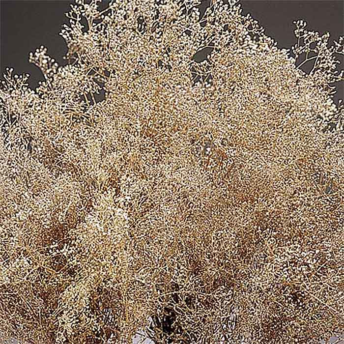 Dried Baby S Breath Gypsophila Champagne Sparkle
