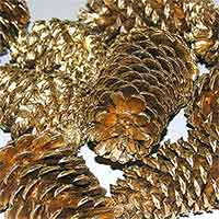 Pinecones Gold 3-4 inches  100 Cones