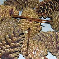 Pinecones Natural 3-4 inches on PIcks 100 Cones