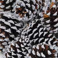 Pinecones Silver Sparkle Tipped 144 Cones