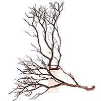 4 Manzanita Branches, Natural, 36""