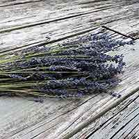 French Dried Lavender, 16 Bunches
