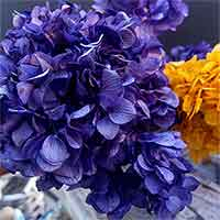 Preserved Hydrangeas, Purple, 12 Bunches