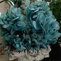 Preserved Hydrangeas, Blue, 12 Bunches