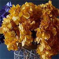 Preserved Hydrangeas, Mango, 12 Bunches