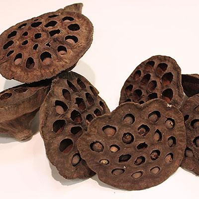 Lotus Pods 100 Heads Bulk