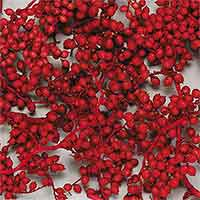Canella Berries, 12 Bags, Red