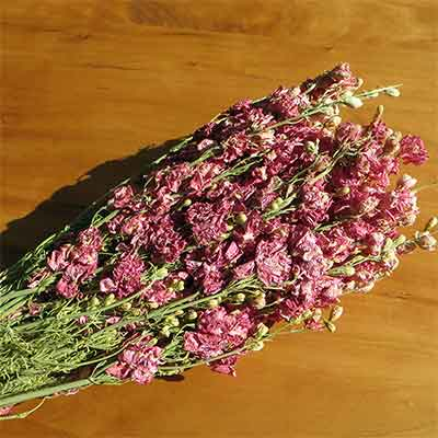 Dried Larkspur Flowers, Pink