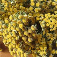 Dried Tansy Flowers, 15 Bundles