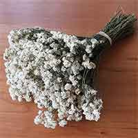 Dried Achillea The Pearl, 10 Bunches