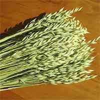 Dried Avena, 20 Bundles