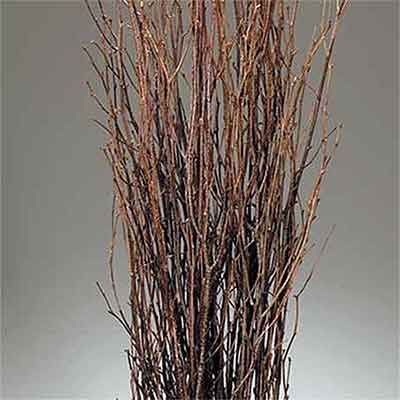 Birch Branches, 120 Branches, Natural