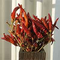 Chili Peppers, 20 Bunches