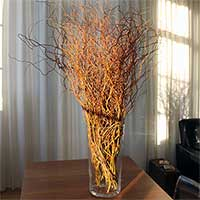 Fresh Curly Willow Branches, 100, Red