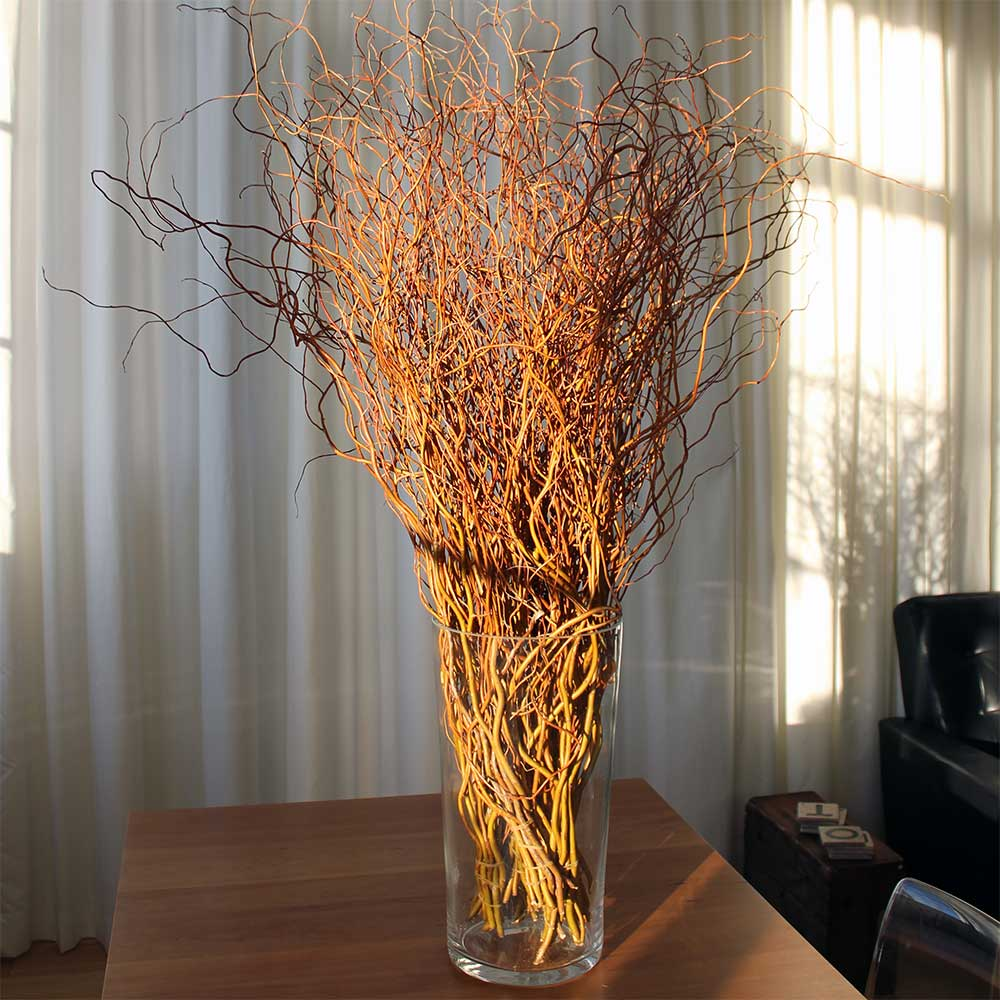 Fresh Curly Willow Branches 100 Red
