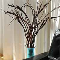 Fantail Willow Branches, 2-3', 100 Stems