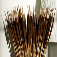 Dried Cattails, 10 Bunches, Dark Brown