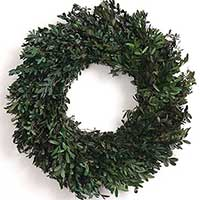 Oregon Boxwood Wreath 18""