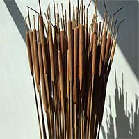 Dried Cattails, 10 Bunches, Light Brown