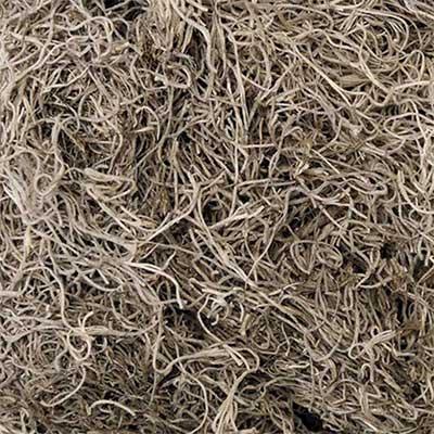 Natural Spanish Moss 5 Bushels Wholesale