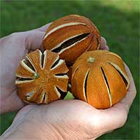 Decorative Slit Dried Oranges Bulk for Sale