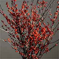 Winterberry Branches, 10 Bundles, 18-24""