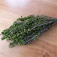 Preserved Heather, 12 Bunches, Green