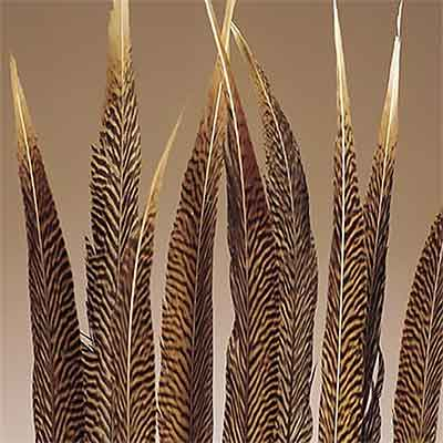 120 Golden Pheasant Feathers, 16-20""