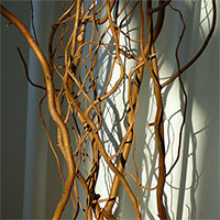 Deluxe Dried Curly Willow 48-60""
