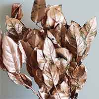Salal, Copper Leaf, 12 Bundles