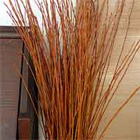 Flame Willow Branches, 300 Branches, 3-4'
