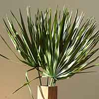 Palmetto Palm Leaves, Green, 12 Bundles