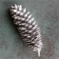 12 Silver/Nickel Sugar Pine Cones, 10-12""