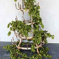 Decorative Hop Garlands, 6.5'