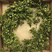 Decorative Hop Garland, 6.5'