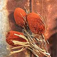 Dried Banksia Hookeriana Flowers, 8 Bunches, Lavender