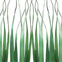 Oceana Palm Leaves, Green, 12 Bundles