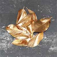 Gold Magnolia Leaves