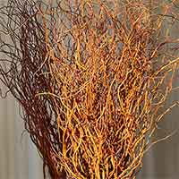 Fresh Curly Willow Branches, 200, Red