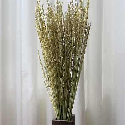 Arrow Grass, 25 Bundles