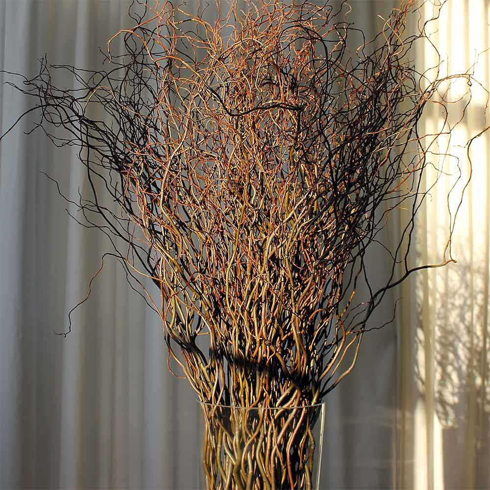 Lighted Branches Sale