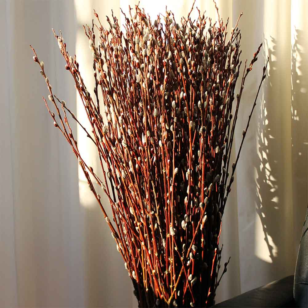 Dried pussy willow branches for sale 4
