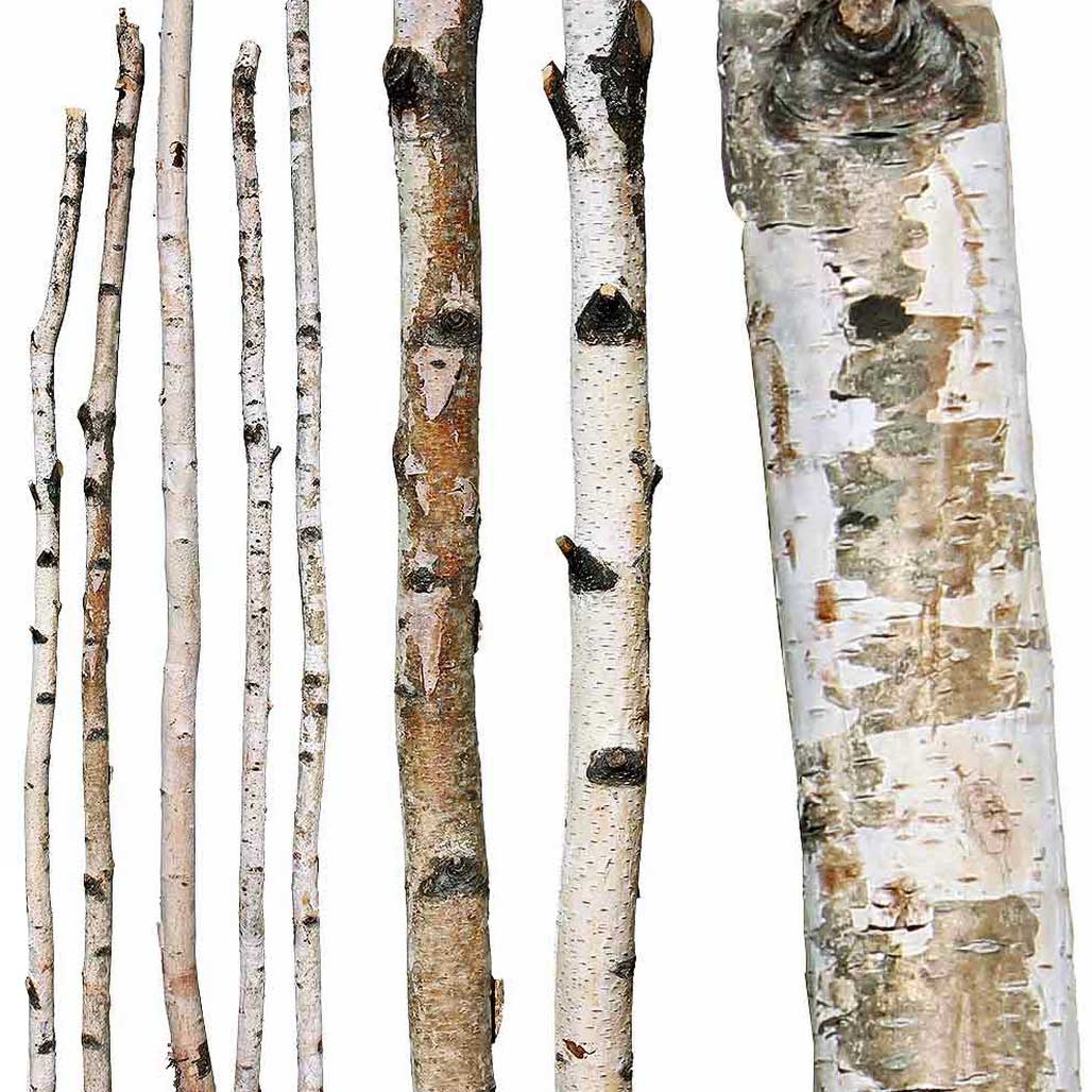 case 6 2 birch paper Type 2 bark white paper-birch bark silver birch pricing formulas birch bark is priced and very large or heavy orders in which case i will need to.